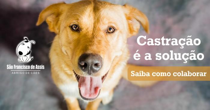 Adote esta ideia castração de cães é a solução abrigo São Francisco de Assis