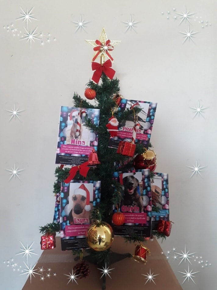 Adote uma cartinha e doe mimos para os cães do Abrigo São Francisco de Assis (2)