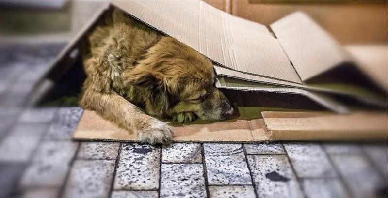 Seja solidário e proteja os cães de rua do frio