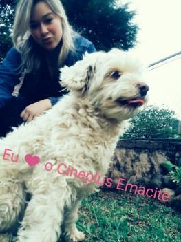 """Promoção """"Eu amo cachorro e o Cineplus Emacite"""" (5)"""