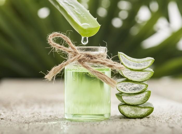 A babosa é uma planta que pode ser cultivada em casa. Para retirar a polpa, basta descascar a folha e utilizar a camada gelatinosa. É excelente calmante para a pele, tem efeito cicatrizante e rejuvenescedor / GB Imagem