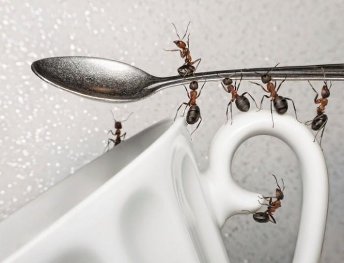 Espantando as formigas